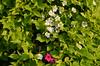 Beauty Spectrum (Metamorfa Studio) Tags: flowers hojas leafs whiteflowers greenleafs photofree freephotos opensourcephoto publicdomainphotos freecommercialphotos totallyfreephotos noattributionphotosources