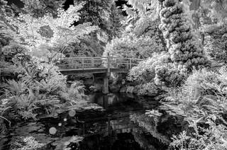 Kubota Garden Infrared (Seattle, Washington)