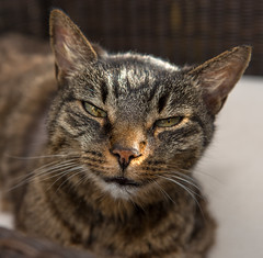 Mephista is back... (westrail) Tags: cat lens nikon fotograf photographer nikkor dslr illness d800 krankheit omot mephista afs2470 catmoments andreasberdan