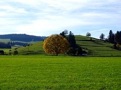 Herbst bei Schönau - Autumn with Schönau (warata) Tags: autumn germany bayern deutschland laub herbst wiese baum allgäu schwaben 2015 swabia süddeutschland southerngermany oberschwaben alpenvorland upperswabia schwäbischesoberland bayerischesallgäu