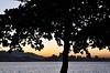 ツ (Ruby Ferreira ®) Tags: bay branches silhouettes silhuetas baíadaguanabara notreatment niteróirj