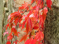 red (germancute) Tags: autumn leaves laub herbst blatt bltter coth