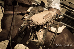 quitation Western (Alain Cachat) Tags: horse france sport america cheval nikon western rodeo cowgirl rider saddle horseriding selle ardche amrique 2015 quitation d610 rhnealpes cavalire horsewoman teampenning rodo vivarais equiblues tamron70200 saintagrve