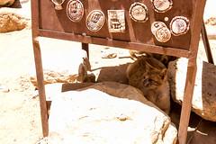 DSC_1610 (vasiliy.ivanoff) Tags: voyage trip travel tour petra jordan journey traveling neareast الأردن البتراء петра иордания ближнийвосток الشرقالاوسط خاورنزدیک המזרחהקרוב
