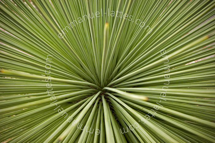 The world 39 s best photos of succulent and yucca flickr for Plante yucca