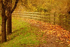 Leaves Have Fallen (Dave Roberts3) Tags: autumn trees fall leaves wales fence leaf path newport gwent coth naturethroughthelens coth5