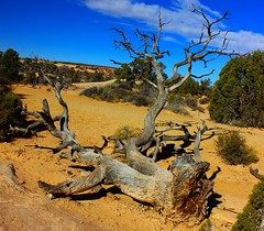 Arches National Park Utah 2015 (johnabraham8936@bellsouth.net) Tags: uploaded:by=flickrmobile flickriosapp:filter=nofilter