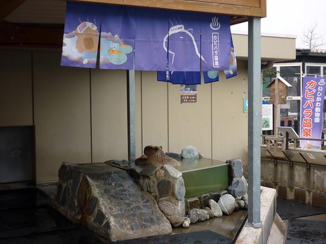 いしかわ動物園-冬の名物「カピバラ温泉」は必見です!の写真