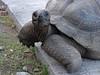 Seychellen-3LaDigue23_20161005-1625 (sabine.haecker) Tags: seychellen seychelles schildkröte turtle ladigue