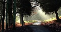Hazy Lazy Sunday Afternoon. (ronalddavey80) Tags: landscape sunburst autumn canon eos 70d park plymouth trees