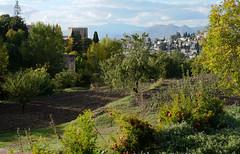 Rima Dadenji, working the (pomegranate) land near Alhambra, Granada, 2015 (Rima Dadenji) Tags: green alhambra granada land soil trees nature environment ecology permaculture pomegranates fuji fujifilm fujifilmxt10 spain rimadadenji landscape