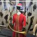 Huntsman's horn and frock coat