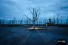 Epecuén 1 (.Alejandro Rubio.) Tags: epecuén buenosaires argentina carhue arbol tree backlight contraluz strobist flash strobe alerubio blue azul light