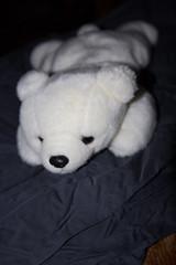IMG_7412 (armadil) Tags: freecycle stuffedtoy toy bear polarbear