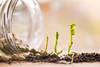 2/52 Cannot live without... (Nathalie Le Bris) Tags: stilllife plant light pea green bodegón luz planta macro verde guisante greenery
