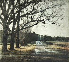 wet spaces (jssteak) Tags: canon t1i rural texas road winter trees wet morning farm hdr