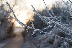 winter impressions IV (piri198) Tags: canon eos eosm eosm10 lightroom6 lightroom 22mm winter cold kalt sunset sonnenuntergang germany deutschland