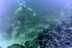 n0005.05 (avaragado) Tags: barbados coralreefclub fd197504 fd197604 fd197905 n0005 tonysmith