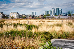 Fall Splendor in Greenwich (Alpine Prairie Photography) Tags: greenwich london onecanadasquare