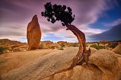 A Force of Two (David Shield Photography) Tags: joshuatreenationalpark nationalpark tree rock landscape longexposure clouds sky color light nikon california