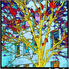 yellow tree (j.p.yef) Tags: peterfey jpyef yef germany hamburg altona backyard tree windows digitalart blue yellow red seasons autumn winter leaves autumnleaves