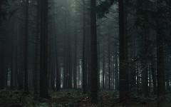 Light (Netsrak (on/off)) Tags: forst natur nebel wald fog forest mist nature woods tree trees baum bäume darkness dunkelheit