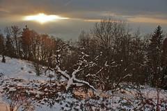 """Allons voir un coucher de soleil ..."" p. 26 .Winter Twilight Time. No. 6595. (Izakigur) Tags: vaud coucherdesoleil twilighttime twilight sun red white neige snow myswitzerland musictomyeyes cantonvaud nikond700 nikkor nikkor2470f28 caux switzerland lasuisse laventuresuisse liberty lepetitprince thelittleprince ilpiccoloprincipe romandie swiss suisia suisseromande winter 2017 izakigur trees topf25 100faves 200faves 250faves 500faves 300faves"