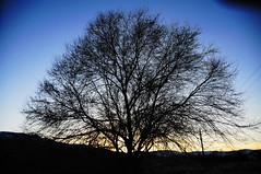 Bare Tree Sunset (Narodnie Mstiteli) Tags: deciduoustree sunset staglane renonevada baretree sundown