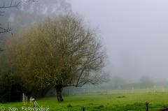 En Vieiro... (xanfer) Tags: néboa viveiro galicia españa