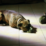 Chiens et chats de l'Ardèche thumbnail