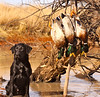 Kansas Pheasant Hunt 49