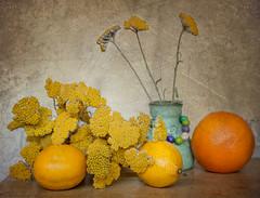 08/2015 Cistrus Project (bess_bg) Tags: stilllife yellow lemon citrus yarrow