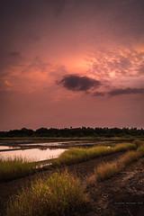 Pink sunset - Ponda (Gladson777) Tags: sunset cloud sun india seascape beach nature colors grass clouds landscape dusk vibrant sony ground trail maharashtra thane cracks 1855 alpha mumbai streaks slt a58 55200 vasai ponda naigaon