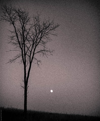 Dusk Moon (ernst.grell) Tags: moon fall ominous surreal