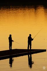 2015-11-01_Q8B4081  Sylvain Collet.jpg (sylvain.collet) Tags: autumn france nature automne fishermen sur marne pcheurs vairessurmarne vaires