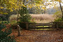 Hek tussen Eschbeek en Haverrietbeek (Hengelo Henk) Tags: herfst bos hofespelo overijsselslandschap paarseroutewandelnetwerk