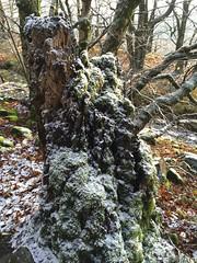 Winterspaziergang Mörschieder Burr_0009 (AndreasHerbert) Tags: mörschied mörschiederburr nationalparkhunsrückhochwald
