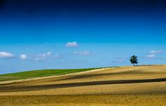 Imagine .......13.11.2015 , Paris (Fabrice Le Coq) Tags: jaune champs vert ombre bleu ciel nuage paysage campagne extérieur arbre champ fabricelecoq