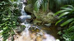 Mt Cootha Botanical Gardens (goodgirlbetty) Tags: longexposure gardens creek botanical waterfall mt filter nd riparian cootha ndx400