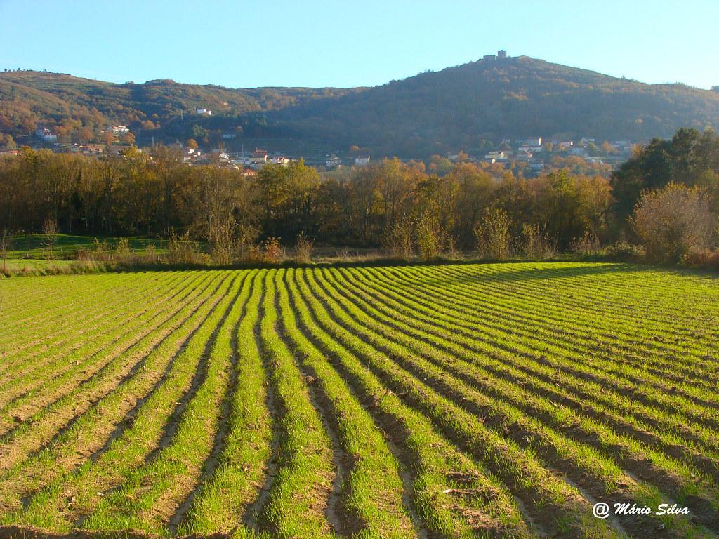 Águas Frias (Chaves) - ... o campo verde com a Aldeia e o Castelo ao fundo ... - dez 10