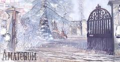 Amatorum in winter