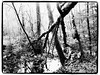 In the forest (Geir Bakken) Tags: olympus olympusomdem5mark2 forest m43 mirrorless microfourthirds blackandwhite bw tree trees water landscape woods nature yabbadabbadoo niceview nice interesting norway norge vestfold horten