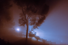 Cape Town (elsableda) Tags: night fog foggy mist long exposure haunting landscape nature southafrica africa dark darkness beauty light shadow
