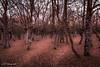 BOSQUE DE ARMENTIA.jpg (JVAZQUEZ59) Tags: armentia bosque otoño vitoriagasteiz