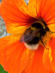 The Secret Life of Bees by Sue Monk Kidd (Mags McLaren) Tags: 7daysofshooting week27 abooktitle focusfriday