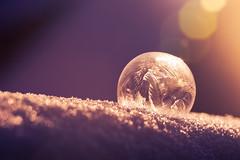 glowing soap bubble in the snow (mad_airbrush) Tags: 5d 5dmarkiii 100mm 100mmf28macrousm ef100mmf28macrousm macro makro soap bubble ice icy winter gefrohren colorful ps lensflares orange purple seifenblase snow schnee frost frozen cold kalt eis sun iceroses bokeh glow glitzern glühen sphere ball