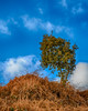Just a Tree (Alan1297) Tags: nikond7200 hdr landscape lonetree