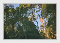 - DSC_1138 (Ferruccio Jochler) Tags: water nature mirror vegetation reflect