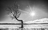L'imperfection défie la monotonie du parfait (Danny Lamontagne) Tags: tree landscape arbre paysage winter hiver québec canada sun star soleil étoile