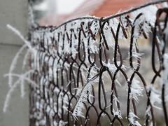 Zúzmarás kerítés 1. (www.czeglediaron.hu) Tags: zúzmara kerítés